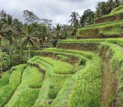Bali Private Transport to Tegalalang Rice Terraces (Ubud)