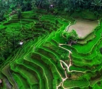 Easy Way to Reach Tegalalang Rice Terrace Bali Swing