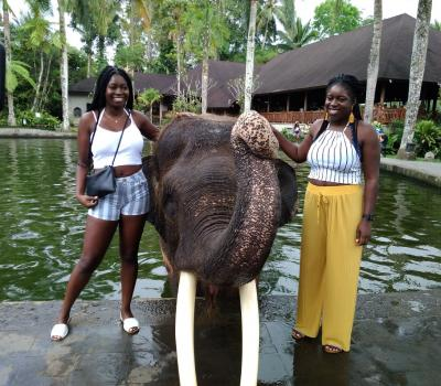 Full Day Elephant Park And Ubud Tour