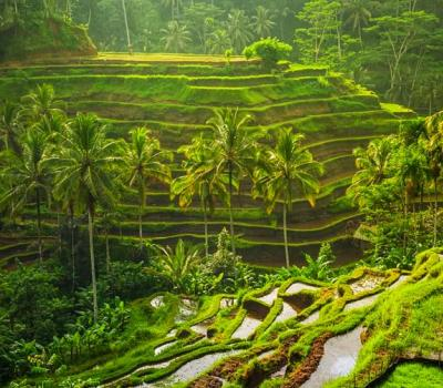 Cheapest Tegalalang Rice Terrace Swing Price + Best Bali Itineraries