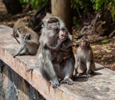Ubud Monkey Forest Day Trip from Canggu – Enjoyable Tour