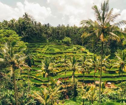4 Excitements You Will Get in Bali Swing Ubud Rice Terrace Tour