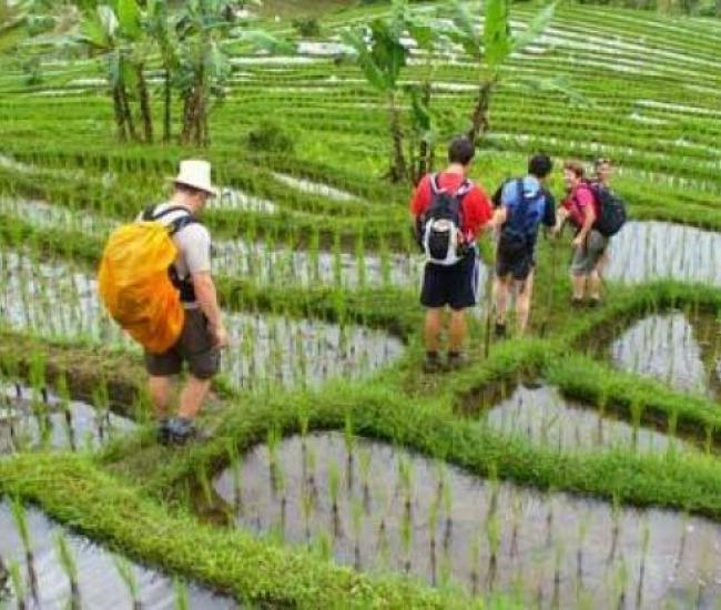 Jatiluwih Rice Terrace Trekking and Tanah Lot Sunset Tour