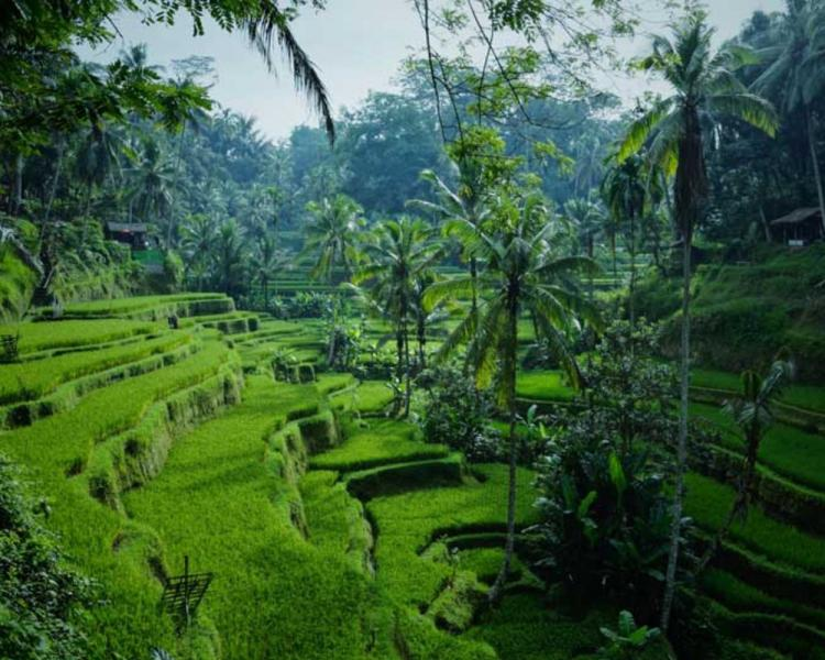 Canggu to Ubud Day Trip, Check Out The Updated Price Here!