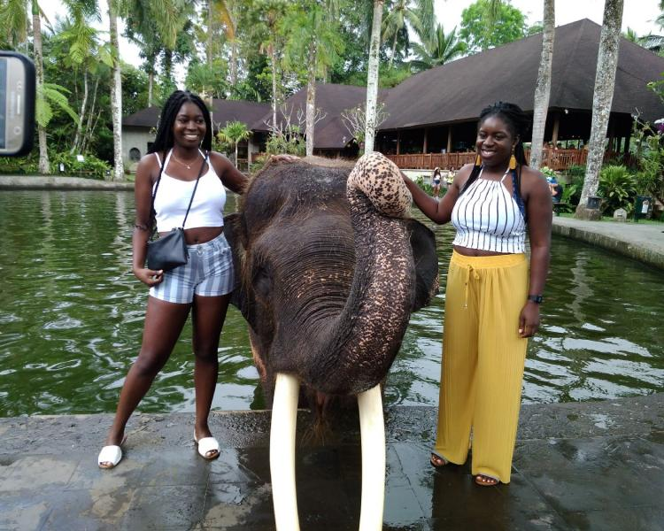 Full Day Elephant Park And Ubud Tour