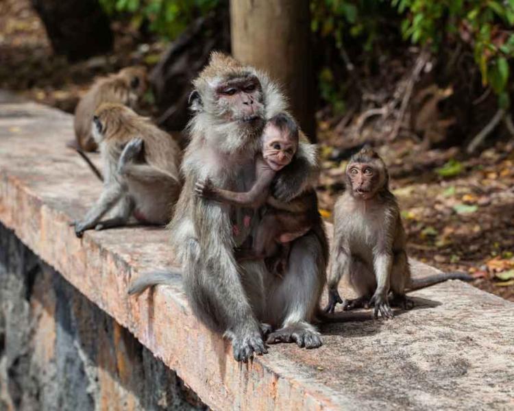 Ubud Monkey Forest Day Trip from Canggu – Enjoyable Tour