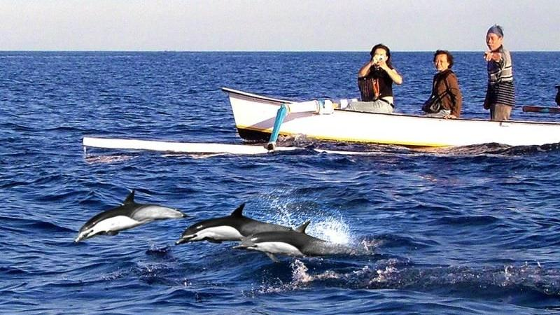 2 Days 1 Night Kintamani Volcano and Lovina Dolphin Tour