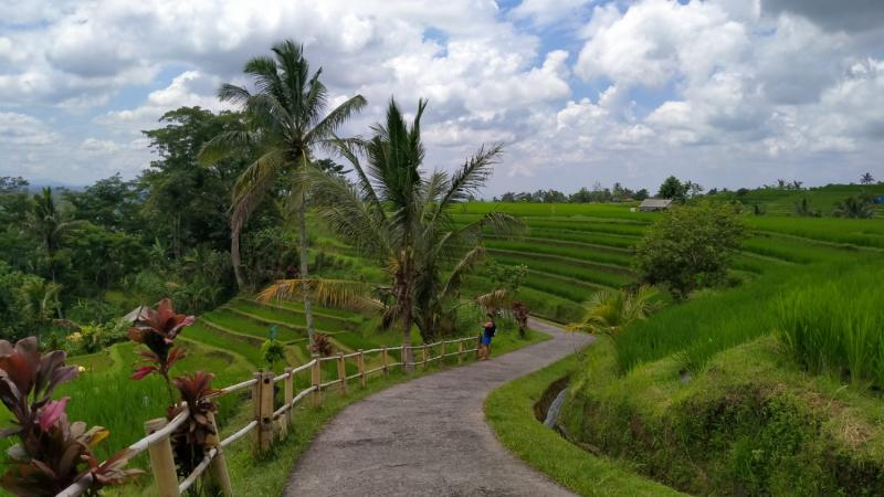 Jatiluwih Rice Terrace Trekking and Tanah Lot Sunset Tour