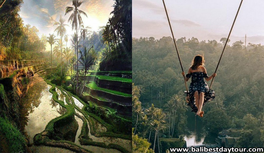 How to Get Bali Swing Tegalalang Rice Terrace Tour Easily