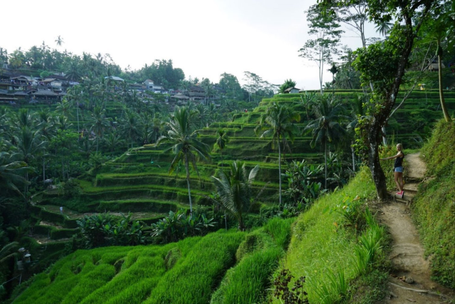 Bali Taxi to Tegalalang Rice Terraces Ubud (Private Trip)