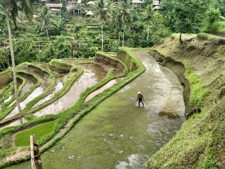 Tegalalang Rice Terrace Trekking Tour Ubud Bali