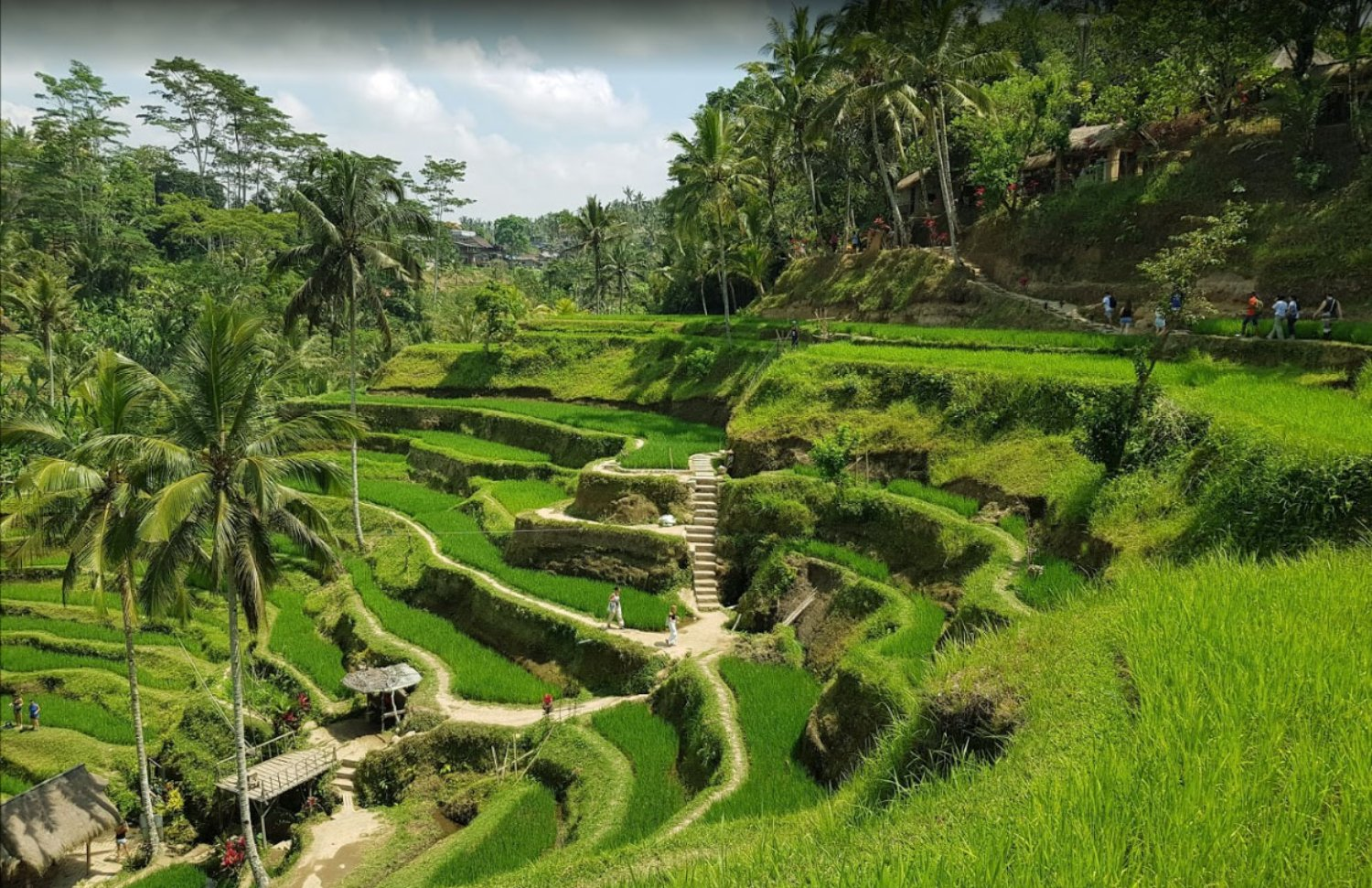 The Newest Taxi Price from Ubud to Tegalalang Rice Terrace