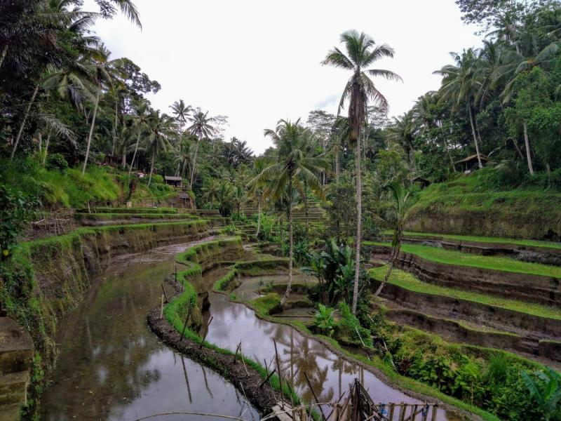 Ubud Your Tegallalang Rice Terrace