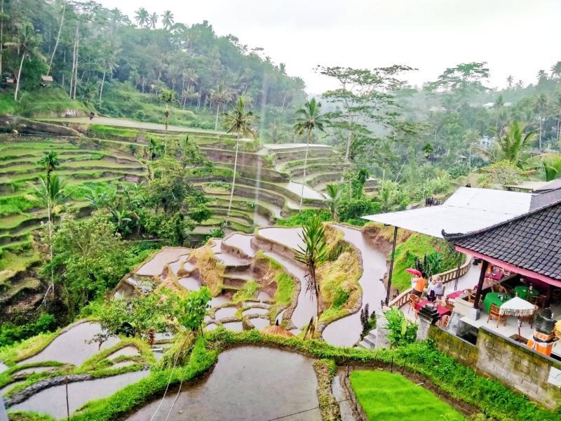 Rice terrace Tegal Lalang