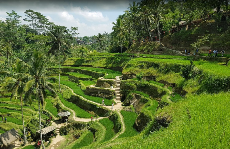 Exploration around Tegalalang Rice Terrace