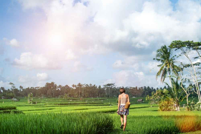 Pedesaan Ubud Dengan Sawah Hijau