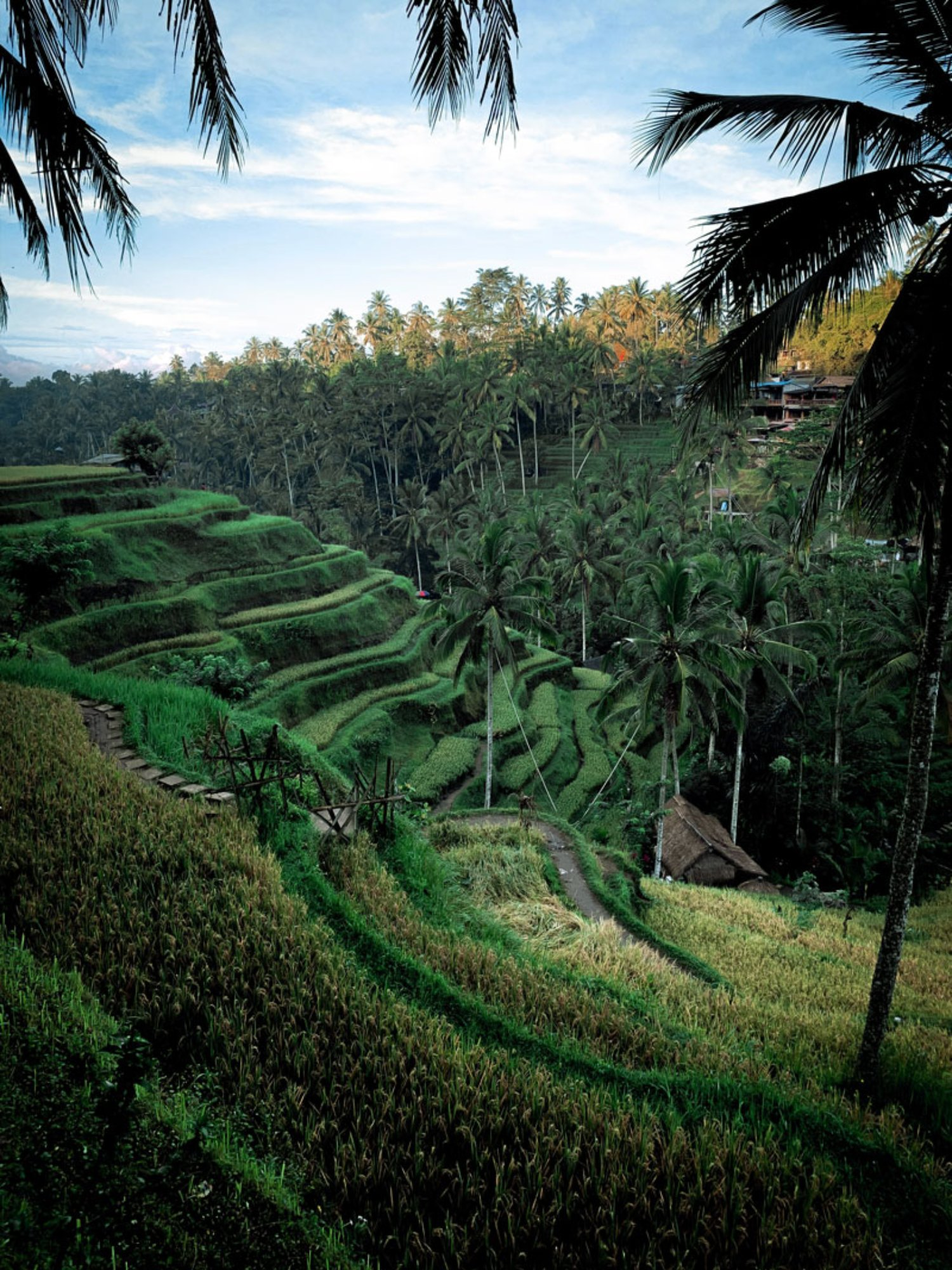 Tegalalang Rice Terrace and Swing