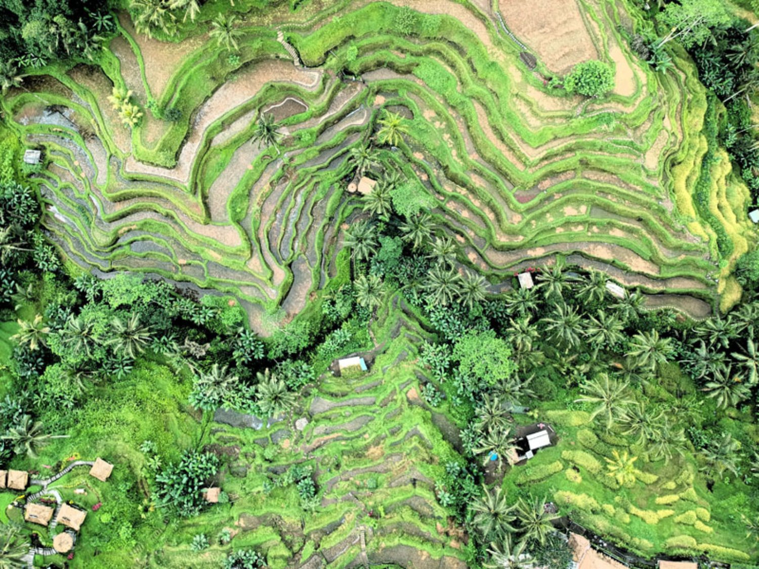 Tegalalang Rice Terrace from Top View