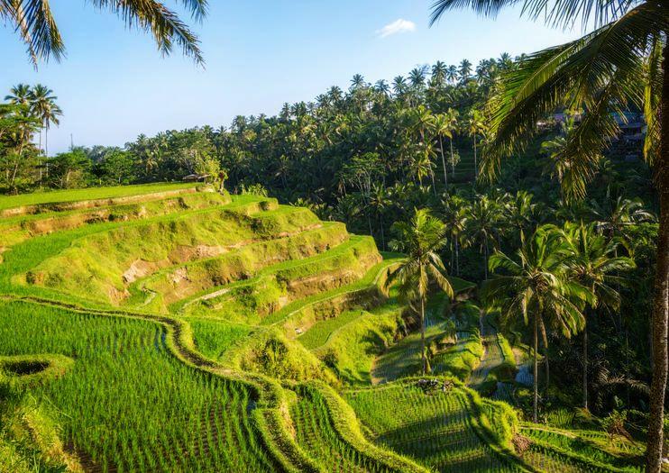 Ubud Tegalalang Rice Terrace